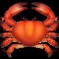 :crab: