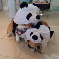 Pandapwnr